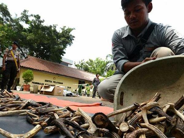 Marak di Internet, Indonesia Penjual Hewan Langka Terbesar di Asia Tenggara