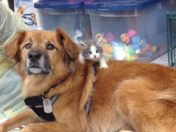 Selamat dari Badai Katrina, Anjing Ini Jadi Pengasuh Kucing