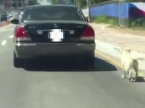 Duh, Pasangan Ini Seret Anjing Peliharaannya ke Jalan Raya dengan Diikatkan ke Mobil!