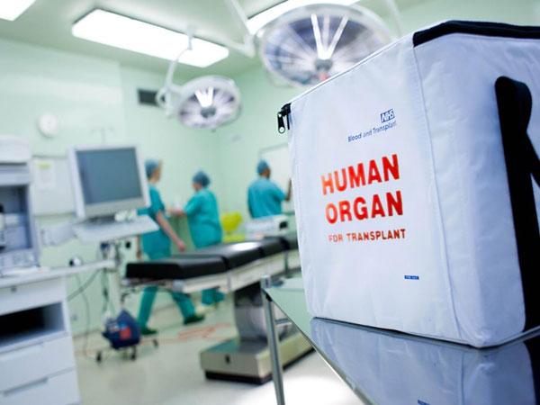 Selain Ginjal, Beberapa Organ Tubuh Ini Juga Bisa Didonorkan