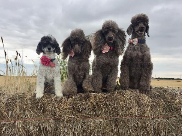 Menggemaskan! Delapan Anjing Didandani dengan Kostum Sederhana tapi Penuh Makna Natal