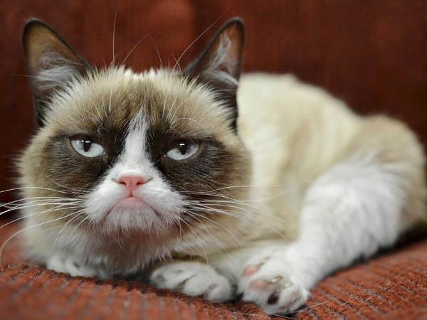 Wah, Si Kucing Terkenal Grumpy Cat Akan Main Film!