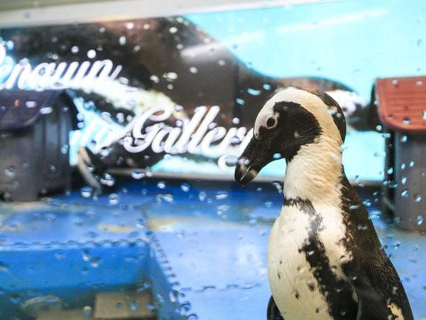 Kurangi Stres Pengunjung, Kini Hadir Bar Bertema Penguin