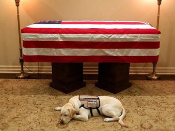 Loyal Sampai Akhir! Anjing Mantan Presiden Bush Senior Ini Setia Menemani hingga Buat Haru Publik