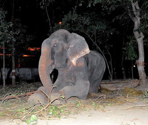 Setelah Disiksa 50 Tahun, Gajah Ini Menangis Saat Diselamatkan