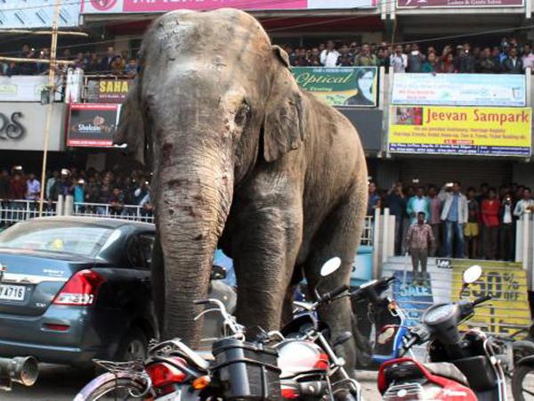 Habitat Dirusak, Gajah Ini Mengamuk Dan Hancurkan 100 Rumah Warga