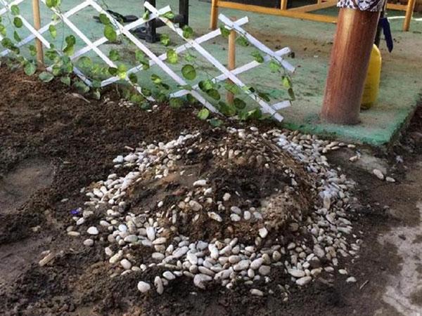 Geger Penemuan Makam Kecil di Kontrakan Keraton Agung Sejagat, Isinya Setengah Janin!