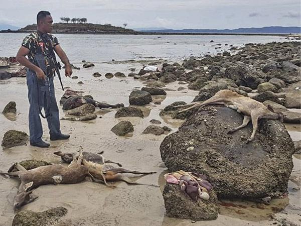 Terungkapnya Kasus Perburuan Rusa di Taman Nasional Komodo