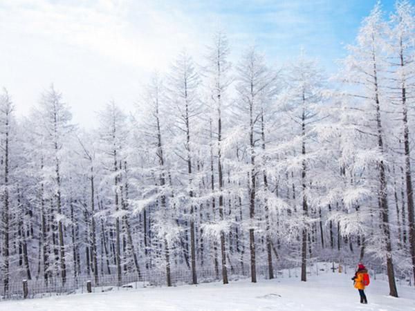 Keindahan Tuan Rumah Winter Olympic Korsel yang Sempat Disinggahi 'Winter Sonata'