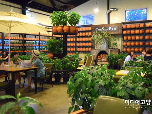 Ngopi di Tengah Kebun Kopi Kafe Coffee Tree Farm