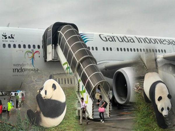 Bawa Sepasang Panda Raksasa, Garuda Indonesia Beri Kejutan untuk Penumpang China-Jakarta