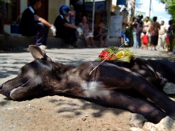 Banyak Anjing Dibantai, Warga Asing Ancam Tak Akan Kunjungi Bali