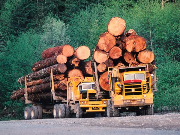 Sejak Kemunculan Manusia, Setengan Pohon di Bumi Telah Lenyap