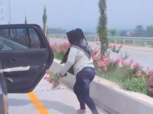 Viral! Emak-emak Sembarangan Cabut Bunga di Jalan Tol, Ini Kronologisnya
