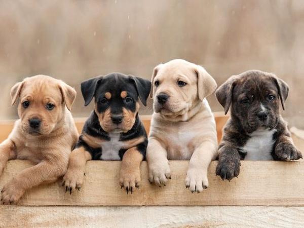 Wow, Studi Menemukan Kesehatan Jantung Meningkat Setelah Pelihara Anjing!
