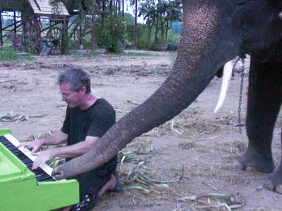 Wah, Seekor Gajah Thailand Ini Senang Bermain Piano!