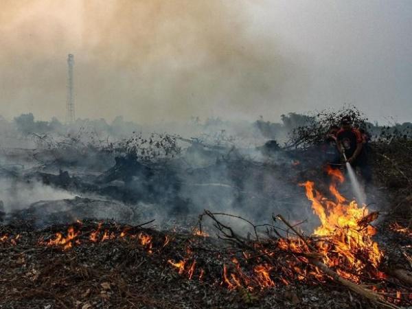 Fakta Baru Kebakaran Hutan dan Lahan, Kemenko Perekonomian: Bukan Untuk Lahan Sawit