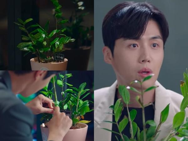 Mengenal Pohon Giok, Tanaman Kesayangan Han Ji Pyeong di Drama 'Start-Up'