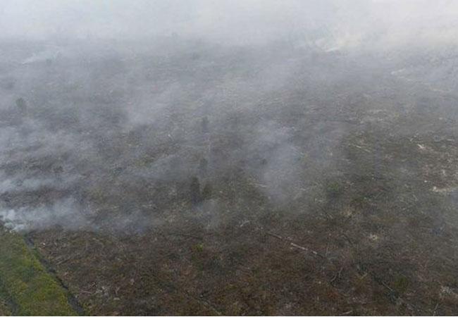 Kebakaran Lahan dan Hutan Kembali Terjadi di Riau