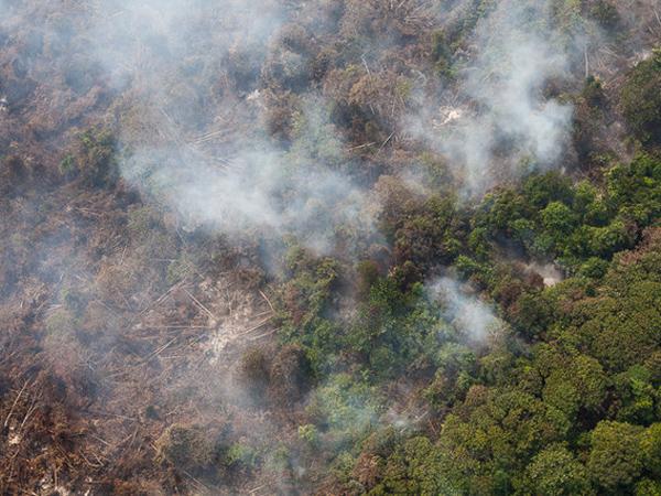 Lima Jam Diguyur Hujan, Api di Sumatera Selatan Belum Padam