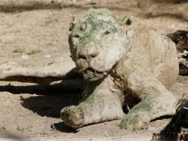 Ditinggal Saat Konflik Israel-Palestina, Koleksi Hewan di Kebun Binatang Ini Berubah Jadi Mumi!