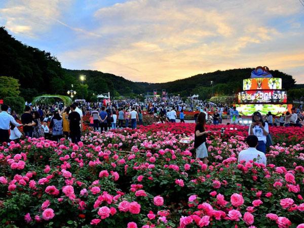 52ulsan-grand-park-rose.jpg