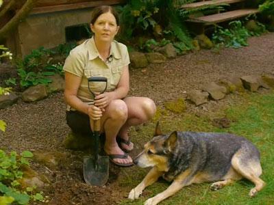 Pemilik Kena Denda Karena Bulu Anjing Kotori Taman