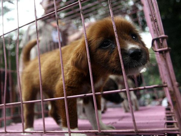 Jangan Termakan Hoax, Ketahui Hal Terkait Rencana Jakarta Razia Anjing dan Kucing