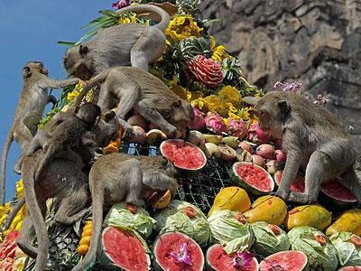 Wah, Di Thailand Ada Festival Pesta Monyet yang Meriah