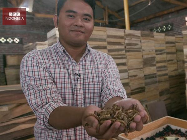 Inovasi Baru, Minyak Goreng Dari Ulat Buatan Mahasiswa Indonesia Dilirik Pasar Eropa!