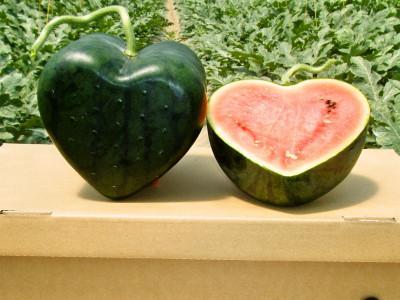 Semangka Berbentuk Hati Ini Bisa Buat Nyatakan Perasaan Cinta?
