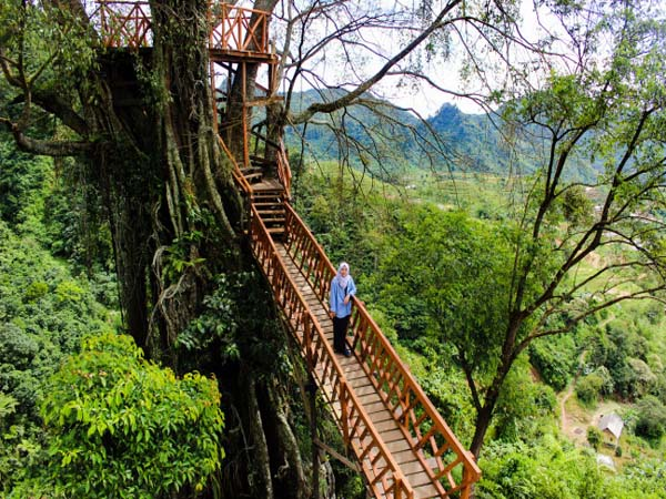 Rumah Pohon Di Bogor Ini Jadi Populer Diantara Para Penggemar Selfie