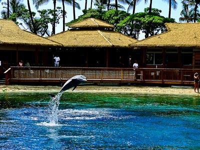 Untuk Hiburan Tamu, Hilton Hawaii Pelihara Hiu