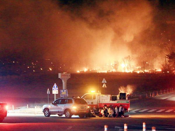 Foto-foto Mencekam 'Lautan Api' di Sokcho, Korea Selatan yang Hanguskan Hutan Hingga Perumahan