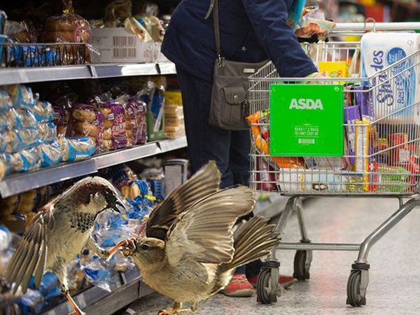 Buat Sarang di Dalam Supermarket, Sekelompok Burung Ini Menyerang Para Pengunjung!