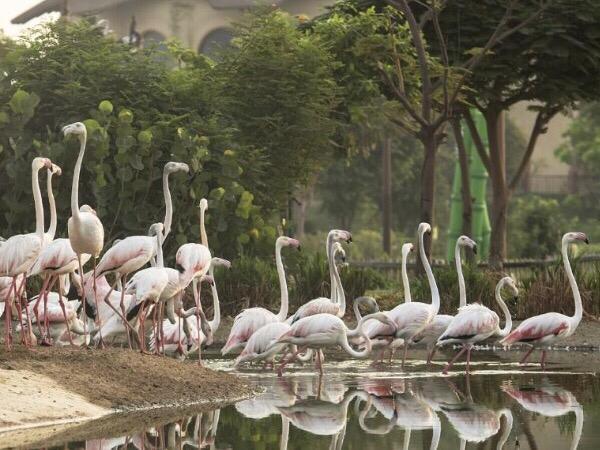 Indahnya Tempat Pembuangan Sampah di Dubai yang Disulap Jadi Taman Safari