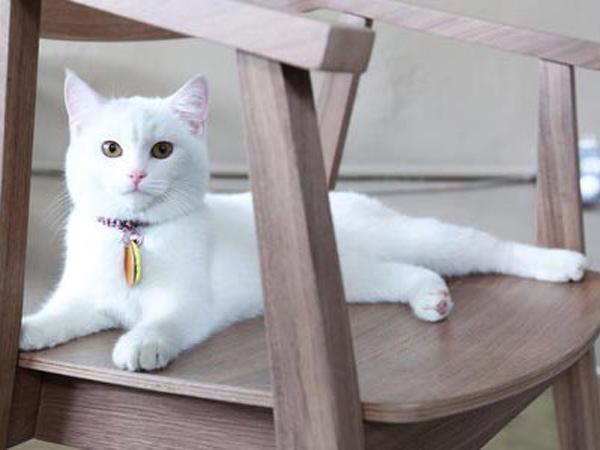 Di Turki, Penyiksa Kucing Dihukum 3 Tahun Penjara!
