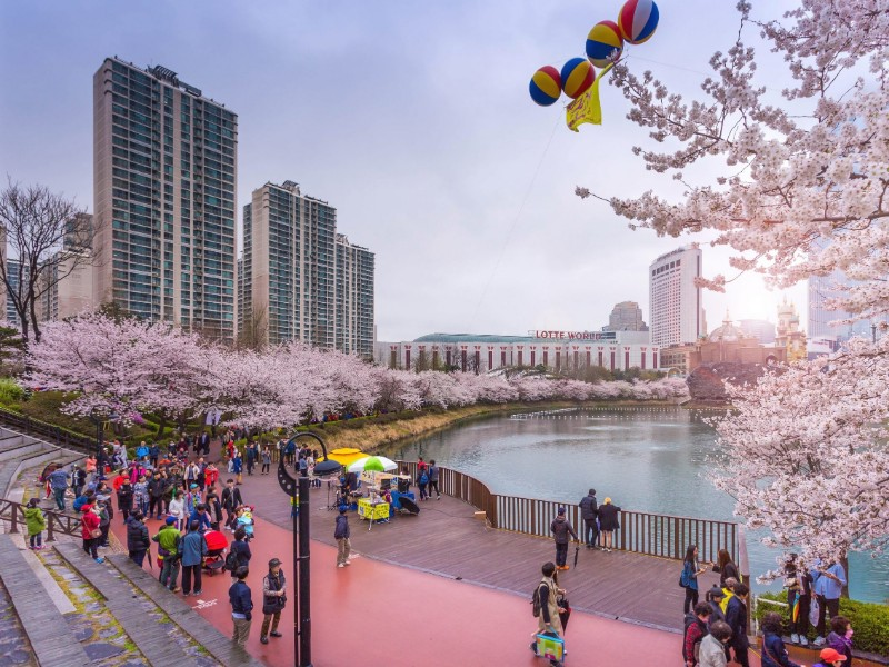 Lokasi Wisata Populer Cherry Blossom di Korea Tutup Sementara