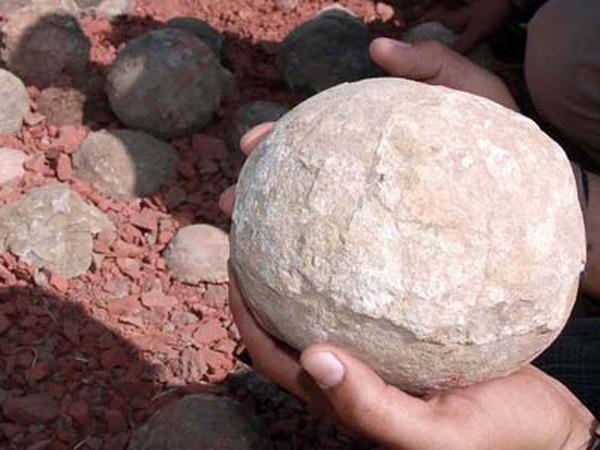 Ditemukan! Sarang Berisi 43 Telur Dinosaurus