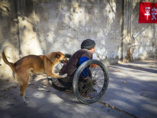 So Sweet, Anjing Ini Setia Dorong Kursi Roda Sang Majikan yang Menderita Lumpuh Saat Bekerja