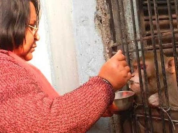 Kesepian, Pasangan di India Ini Berikan Harta Melimpah untuk Monyet Peliharaannya