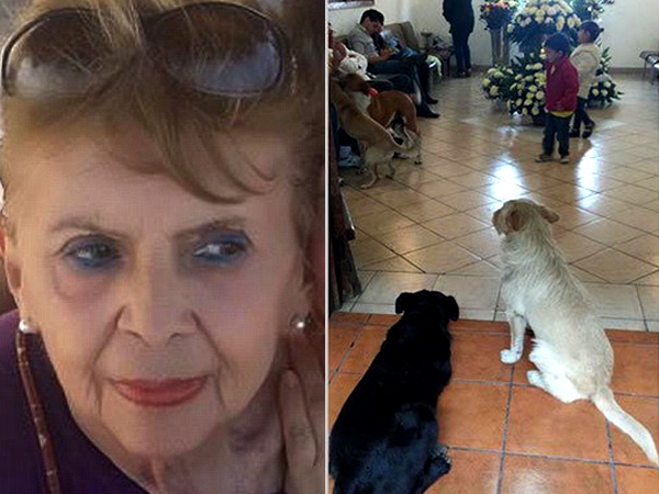 Puluhan Anjing Liar Lakukan Perjalanan Jauh Demi 'Melayat' ke Pemakaman Wanita Ini