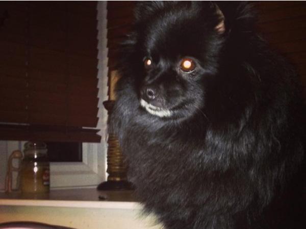 Hanya dengan Tatapan Mata, Anjing Ini Bisa Buat Orang Tak Sadarkan Diri?