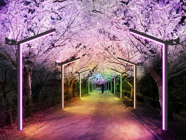 Busan Siapkan 10 Taman Lampu untuk Jadi Kota dengan Pemandangan Malam Terbaik di Korea