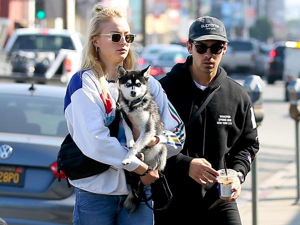 Kehilangan Anjing Kesayangan karena Kecelakaan Tragis, Joe Jonas dan Sophie Turner Kompak Buat Tato