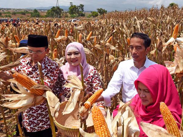Resmi Undur Diri dari Demokrat, Inikah Alasan Tuan Guru Bajang Berbalik Dukung Jokowi?