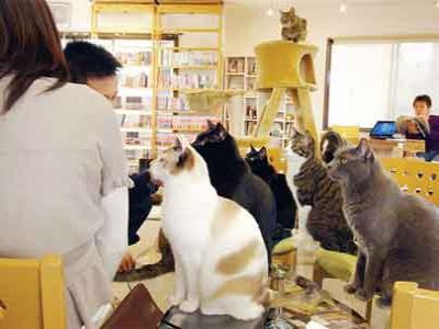 Di London, Kini Tersedia Kafe Khusus Kucing