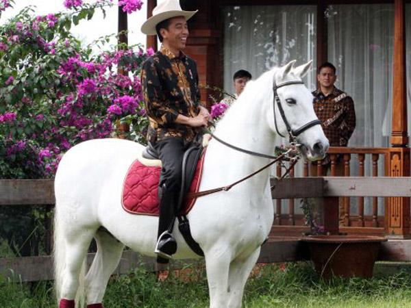 Ini Dua Kuda Puluhan Juta dari Warga Sumba yang Dilaporkan Jokowi