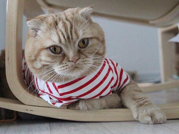 Dikenal Sebagai Hewan Pemalas, Kamu Bisa Tiru Gaya Hidup Sehat dari Kucing Lho!
