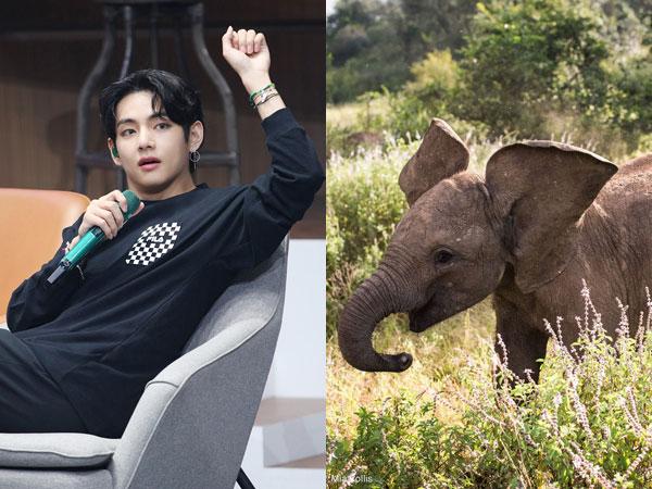 Kenalan dengan Roho, Bayi Gajah Lucu yang Diadopsi Atas Nama V BTS